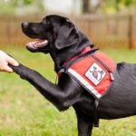 U.S. Supreme Court Sides with Special Needs Student over Service Dog Dispute